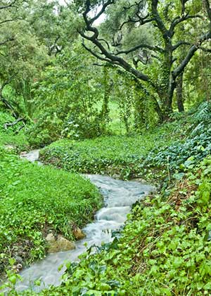 Stream-with-Green-Woods300